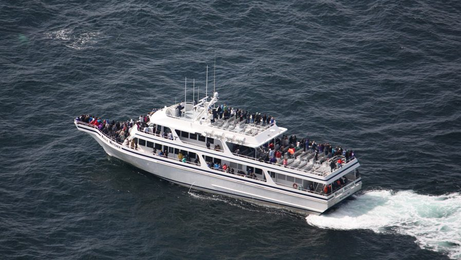 Our Boat - Hyannis Whale Watcher